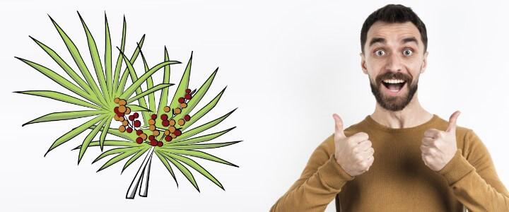 Palma sabałowa i jej działanie na prostatę